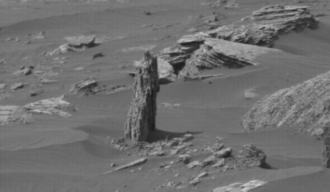 This is a rock, not a tree stump